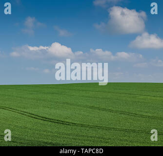 Field of grass in northern Denmark - Stock Image