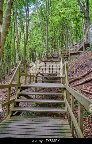 Steep stairs in the forest at the cliffs of Moen, Denmark - Stock Image