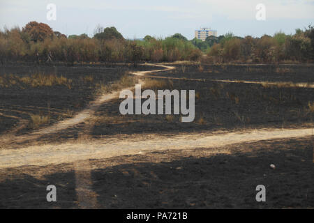 Wansted Flats, UK: 20 July 2018: A churred Wanstead flats, the scene of the July 15th fire where around the area of 100 football pitches was burnt on the tinder-dry flats. 225 firefighters and 40 fire engines tackled the blaze in what has been described as the largest grass fire ever seen in the capital. Credit: David Mbiyu/ Alamy Live News - Stock Image