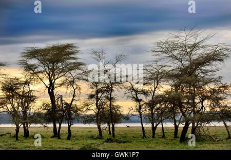 Landscape of Lake Nakuru Park, Kenya. Africa. - Stock Image