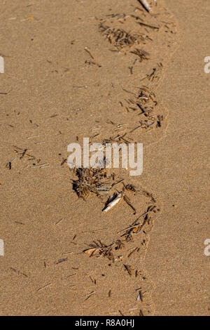 Plastic pollution small pieces of debris at the water tide mark on the beach Agadir, Morocco, Africa - Stock Image