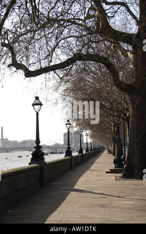 Tree lined path at Chelsea Embankment London - Stock Image