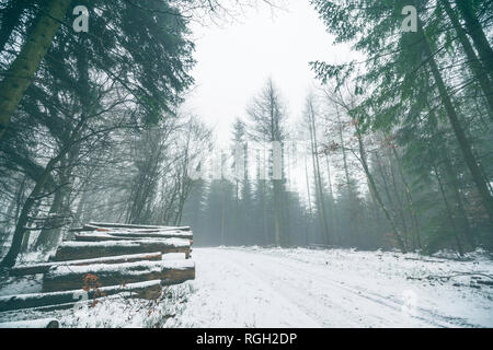 Woodpile in a misty forest with snow on the ground in the winter - Stock Image