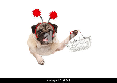 happy smiling pug puppy dog holding up wire metal shopping basket, wearing red diadem, isolated on white background - Stock Image