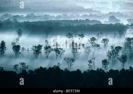 aerial landscape with fog & trees - Stock Image