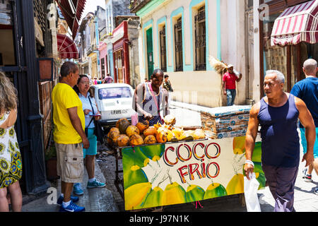 Man selling coconut drink direct from coconut, Cuban man with coconuts stall, Cuban street seller, havana street - Stock Image