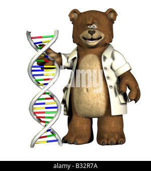 baer with DNA - Stock Image