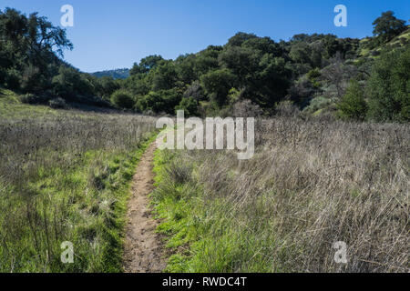 Dirt hiking path bends through a green grassy field in the rolling hills of southern California. - Stock Image