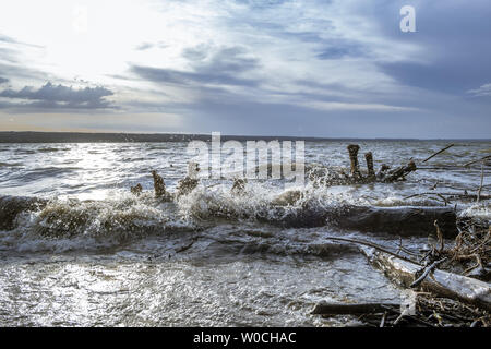 Driftwood after Storm at Ammersee Lake, Bavaria, Germany - Stock Image