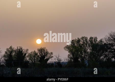 Sunset with sand suspended in the atmosphere, coluring the sky red, over some trees silhouettes - Stock Image