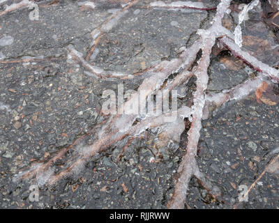 Ice of ground trailing bramble canes. - Stock Image