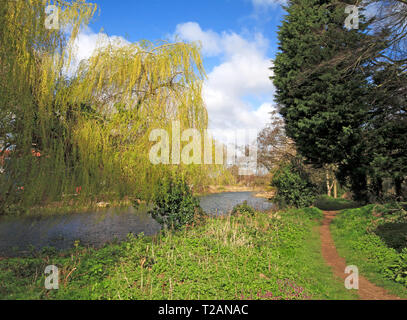 A view of the River Bure with public footpath upstream of the B1150 road bridge at Coltishall, Norfolk, England, United Kingdom, Europe. - Stock Image