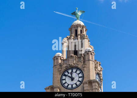 Royal Liver building  with Liverbird. - Stock Image