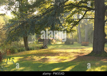 Barnwood Park on a sunny autumn day. Sun rays seeping through the branches of a tree. - Stock Image