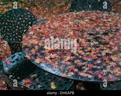 fallen Autumn leaves on outdoor table - Stock Image