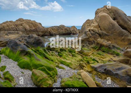 Rock pool covered in green seaweed. - Stock Image