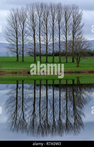 Trees by a lake in Cunbria, England - Stock Image