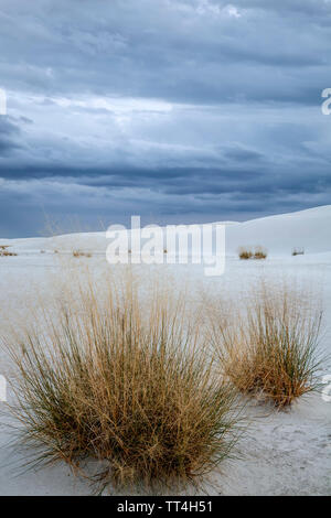 Shrubs in sand, White Sands National Monument, Alamogordo, New Mexico USA - Stock Image