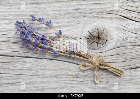 botany, lavender, Lavendelstraeusschen, No-Folded-Card or Greeting-Card or Postcard-Use, worldwide, unlimited time, - Stock Image