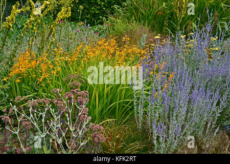 Garden flower border with Perovskia, Crocosmia and Verbascum making a colourful display in late summer - Stock Image