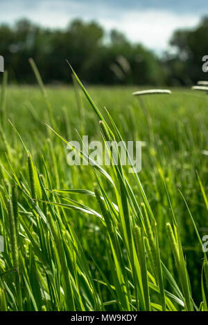 Hay Field - Stock Image