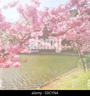 Lovely pond with pretty, pink cherry blossoms. Vintage, painterly textures overlay for a soft Spring look. - Stock Image