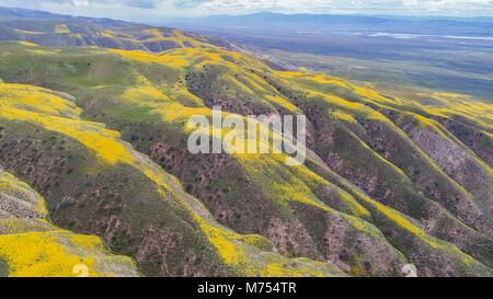 Wildflower blooms in the Temblor Range, Carrizo Plain National Monument, California, Aerial view - Stock Image