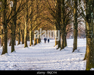 A man and child walking their dog through an avenue of bare winter trees on snow-covered ground at Coate Water in Wiltshire. - Stock Image