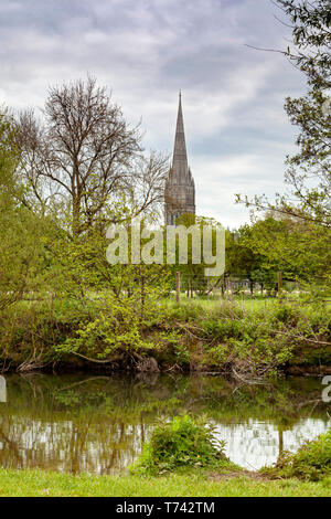 Salisbury Cathedral viewed from a distance with sheep grazing in the foreground - Stock Image