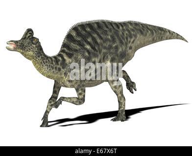 Dinosaurier Velafrons coahuilensis  / dinosaur Velafrons coahuilensis - Stock Image