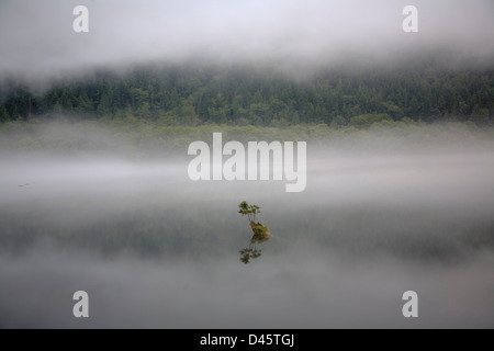 A sapling grows from a partially submerged tree trunk, Silver Lake, Silver Lake Provincial Park, British Columbia, - Stock Image