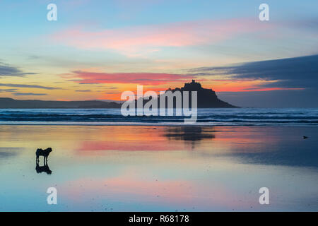 Small pug dog on beach at Cornwall at sunrise with colourful sunrise reflecting off the wet sand - Stock Image