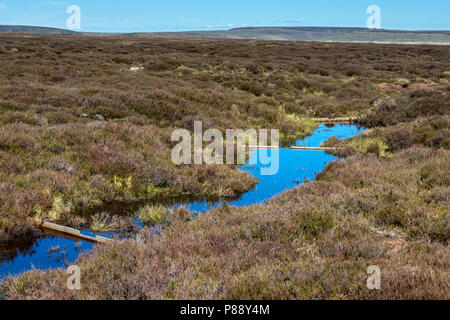 Small dams built to reduce peat erosion and increase water retention, on the Bleaklow plateau, near Glossop, Peak District, Derbyshire, England, UK. - Stock Image