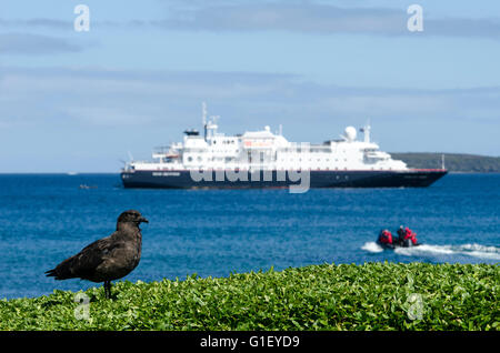 Expedition cruise Enderby island New Zealand - Stock Image