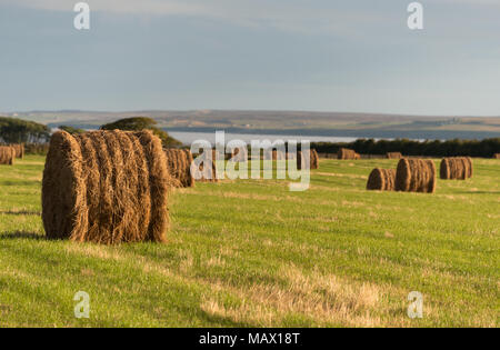 Hay Bales at Harvest Time - Stock Image