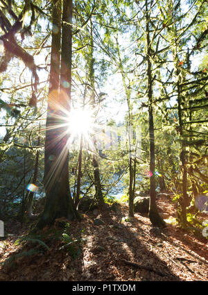 Sunburst through the forest in Lynn Valley Canyon, North Vancouver; Vancouver, British Columbia, Canada - Stock Image