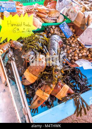 Live lobster on market stall - France. - Stock Image