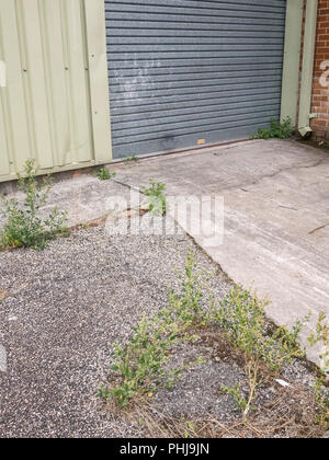Weeds growing in cracks of concrete covered yard in an industrial estate. - Stock Image