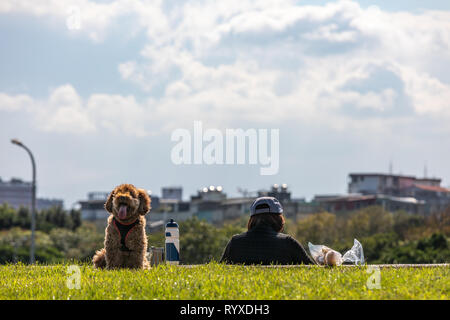 Brown poodle and owner relaxing in the park. - Stock Image