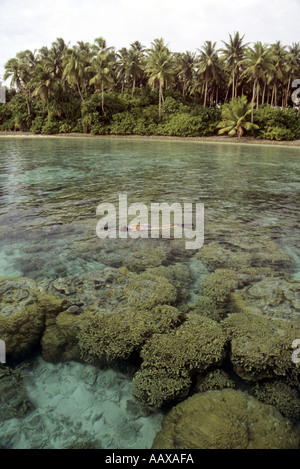 shallow corals and reefs of the Marshalls - Stock Image