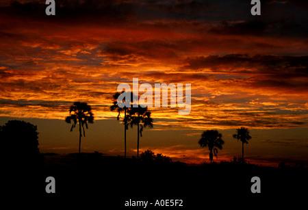 African Sunset, Savuti, Botswana, Africa - Stock Image