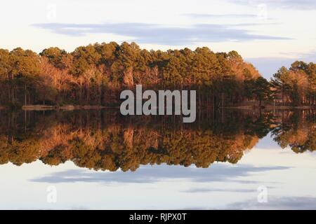 Forest reflecting in lake at sunset - Stock Image
