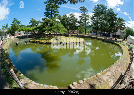 Terrapin pond in Nara, Japan - Stock Image