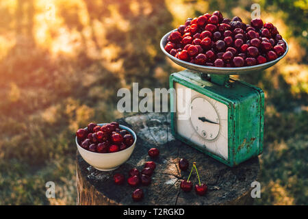 The old stump on which lies a ripe cherry and old scales - Stock Image