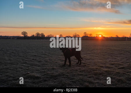 Puppy enjoying the sunrise while looking at seagulls - Stock Image