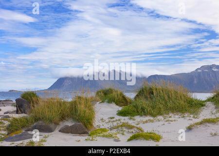 Beach, Eggum, Grass, Bay, Vestvagoya, Lofoten, Norway, Europe - Stock Image
