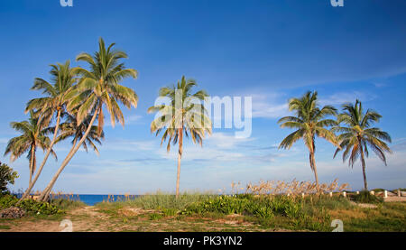 Coconut palm trees and a beautiful sunny late afternoon on a secluded beach near Fort Lauderdale. - Stock Image