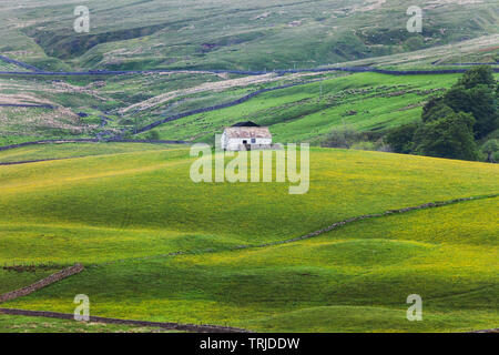 A Traditional Whitewashed Stone Barn Surrounded by Wild Flower Hay Meadows, Harwood, Upper Teesdale, County Durham, UK - Stock Image
