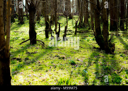 spring woods - Stock Image