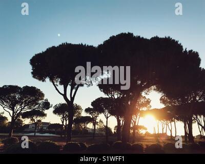 Sunset behind trees - Stock Image